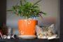 Posude za cvijeće za ukrašavanje doma i okućnice